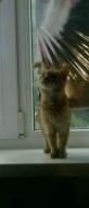 Кошечки ищут хозяев