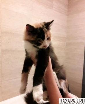 Котенок- Пират 3ех цветыш в добрые руки