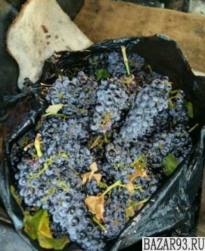 Виноград технический, винный